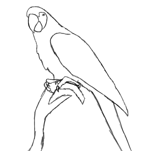 Parrot drawing outline - photo#1