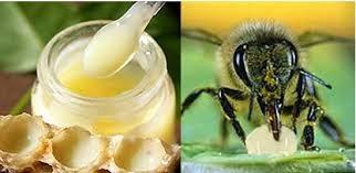 Giữa sữa ong chúa tươi và sữa ong chúa viên nang loại nào sẽ tốt hơn?