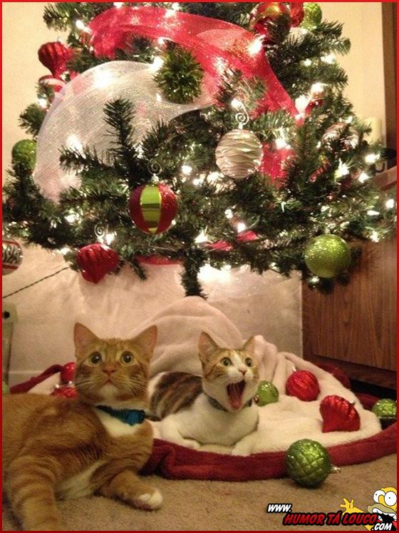 O Natal - Imagens engraçadas de natal