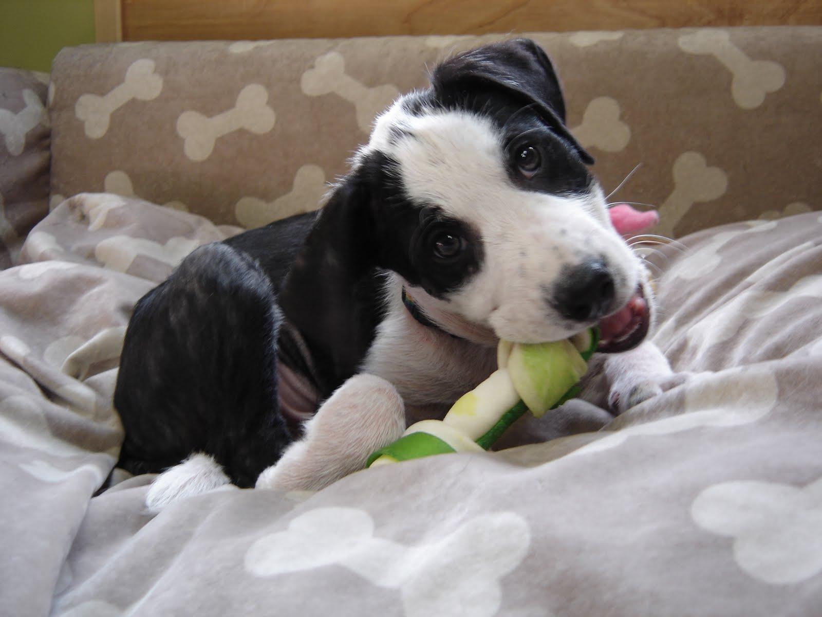Beagle Dalmatian Mix | Dog Breeds Picture