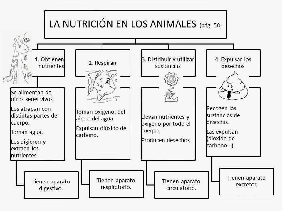 Educación Primaria en el Zapatito: LA NUTRICIÓN EN LOS ANIMALES Y ...