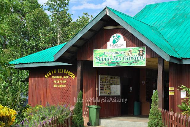 Tea Garden in Ranau Sabah