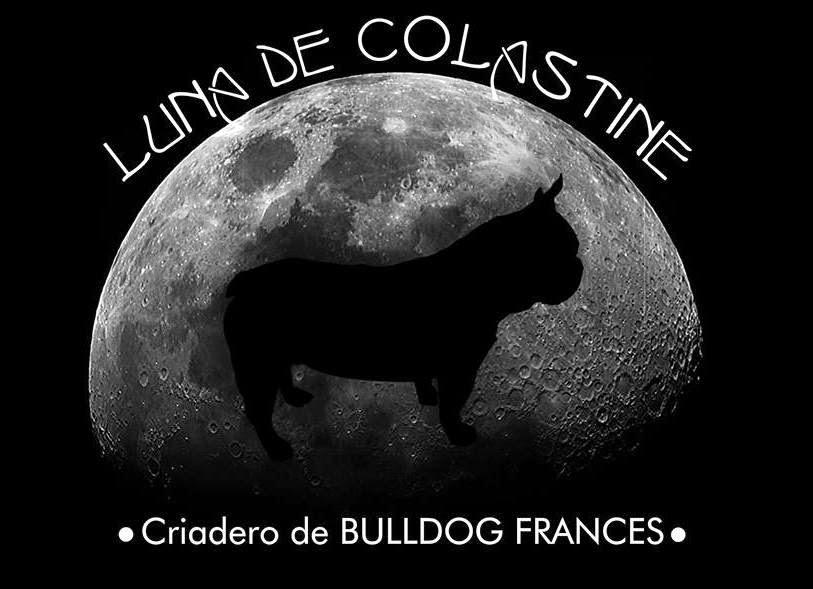 CRIADERO FAMILIAR DE BULLDOG FRANCES