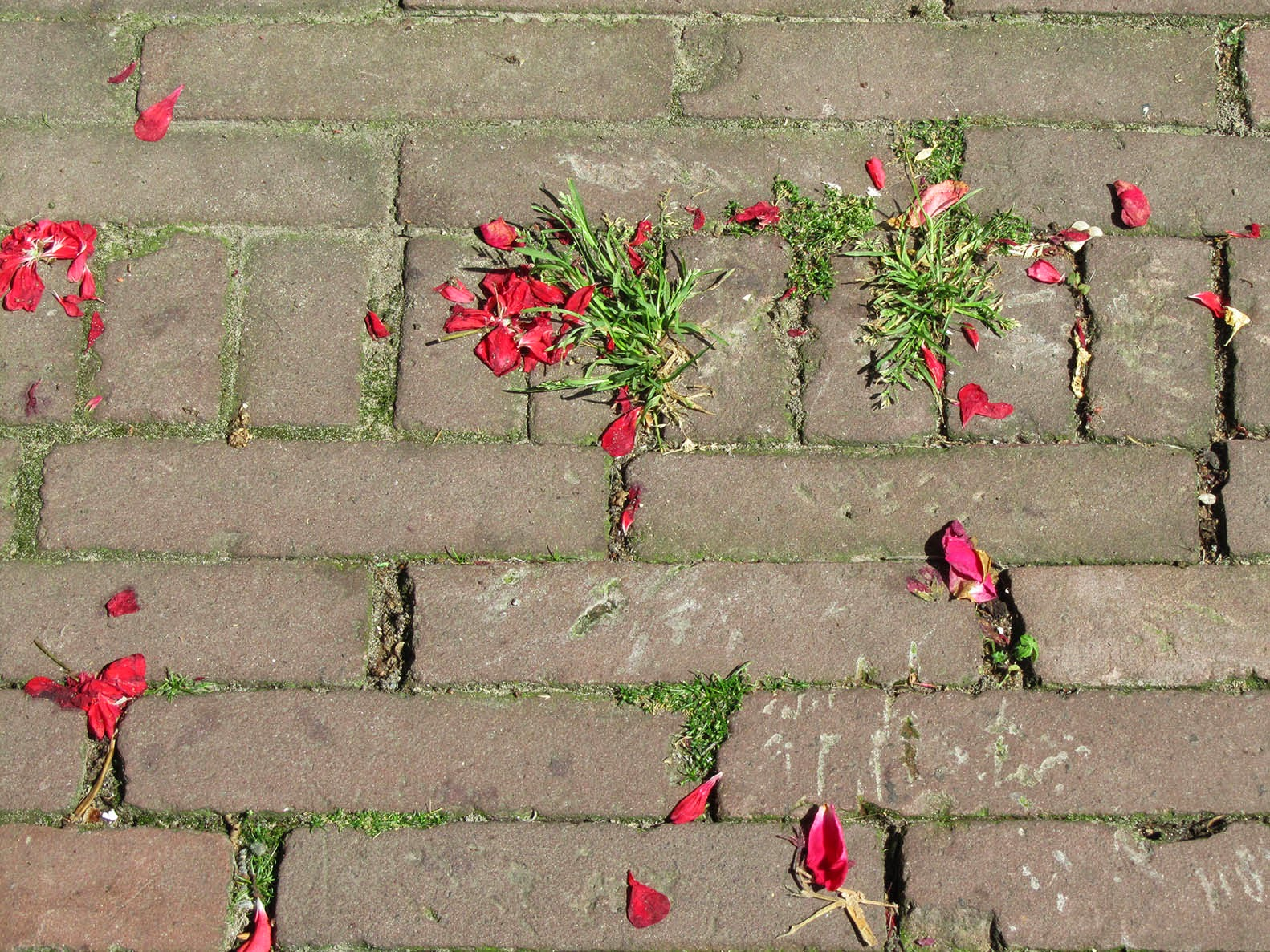 red rose petals on the ground