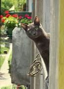 blog śmieszne koty: śmieszne zdjęcia koty smieszne zdjecia koty