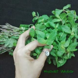 daun mint leaf