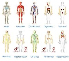 Los órganos y las Emociones