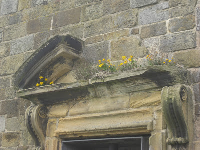 Yellow flowers growing atop a door frame at Whitby Abbey