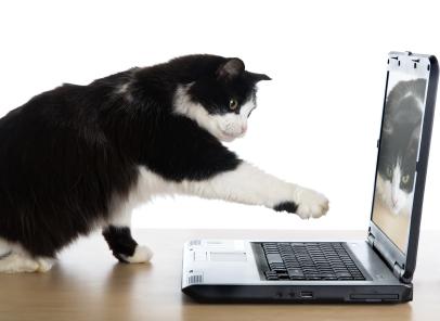 Humane Alliance Cat Neuter