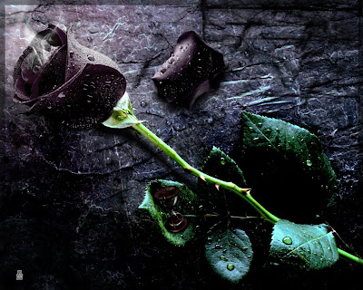 Wallpapers hd desktop wallpapers free online rose for On the floor meaning