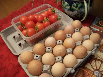 Chickens still laying and tomato harvest