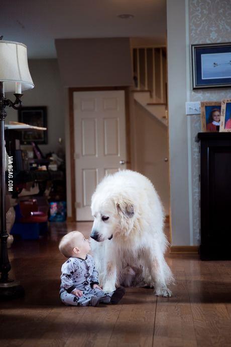 Top 5 Most Loyal Dog Breeds