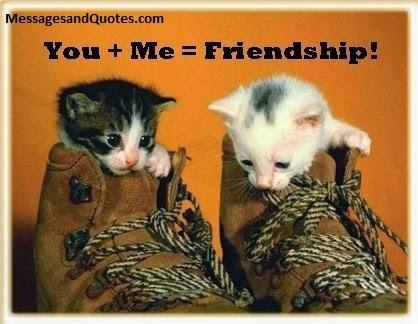 Cute Kittens friendship