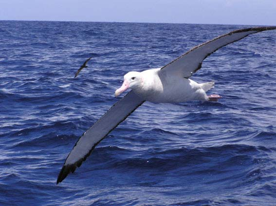 do you think significance albatross ancient mariner Do you know any other references to the albatross in music or literature  i've missed class about coleridge and the rime of the ancient mariner.