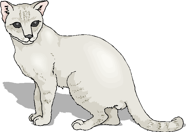 White Cute Free Cat Clipart