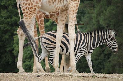 ça grouille au Zoo de Thoiry !