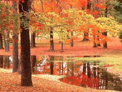Tổng hợp các bức ảnh đẹp về thiên nhiên sưu tầm cực đẹp làm ảnh nền máy tính hoặc điện thoại di động.