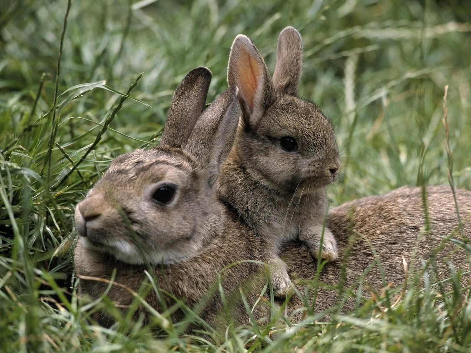 Animales que nacen de la madre - Imagui