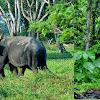 Tipe fauna Asia, fauna peralihan dan fauna Australia
