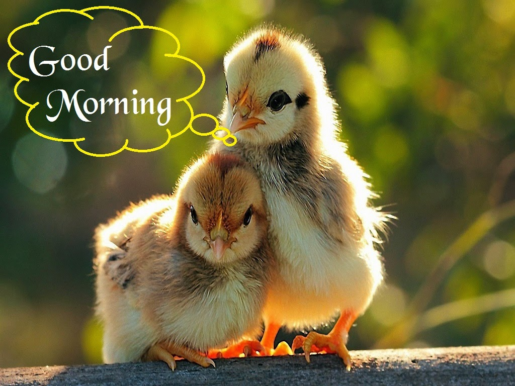 Love Birds Good Morning Wallpaper : Love Birds cool Picture To Say Good Morning Festival chaska