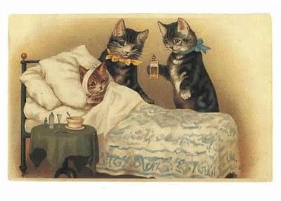 Merawat Kucing Sakit