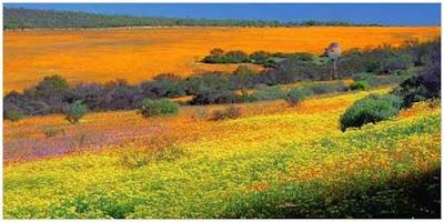 namaqualand, afrika