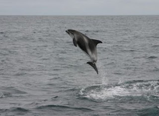 Whale Friendly tours iceland