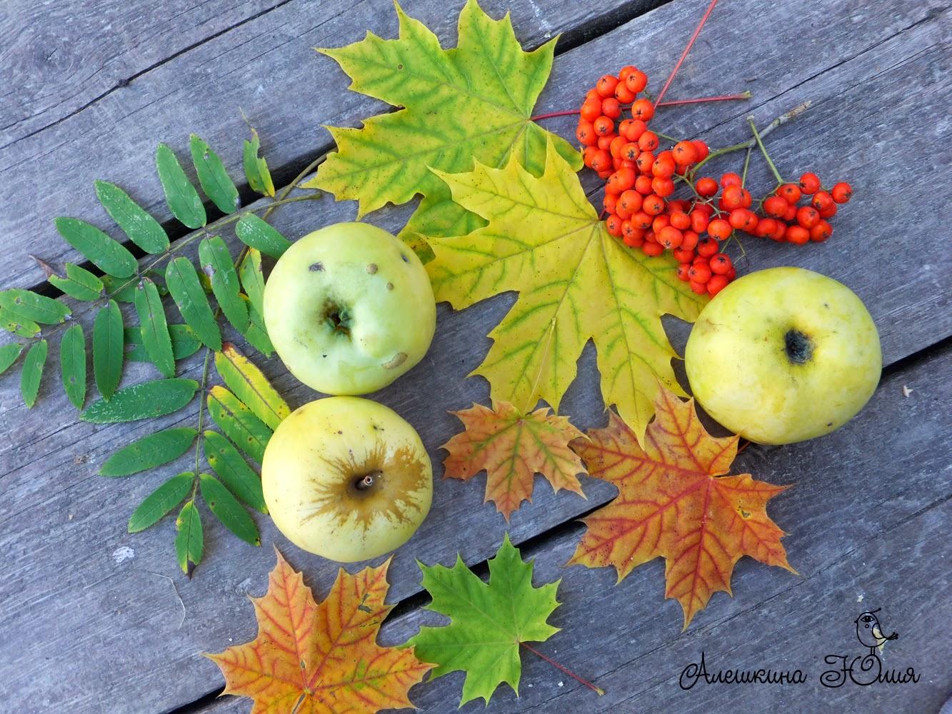 осенний урожай, яблоки, рябина, кленовый листок