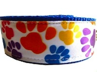 Dog Leash Paws Multicolor