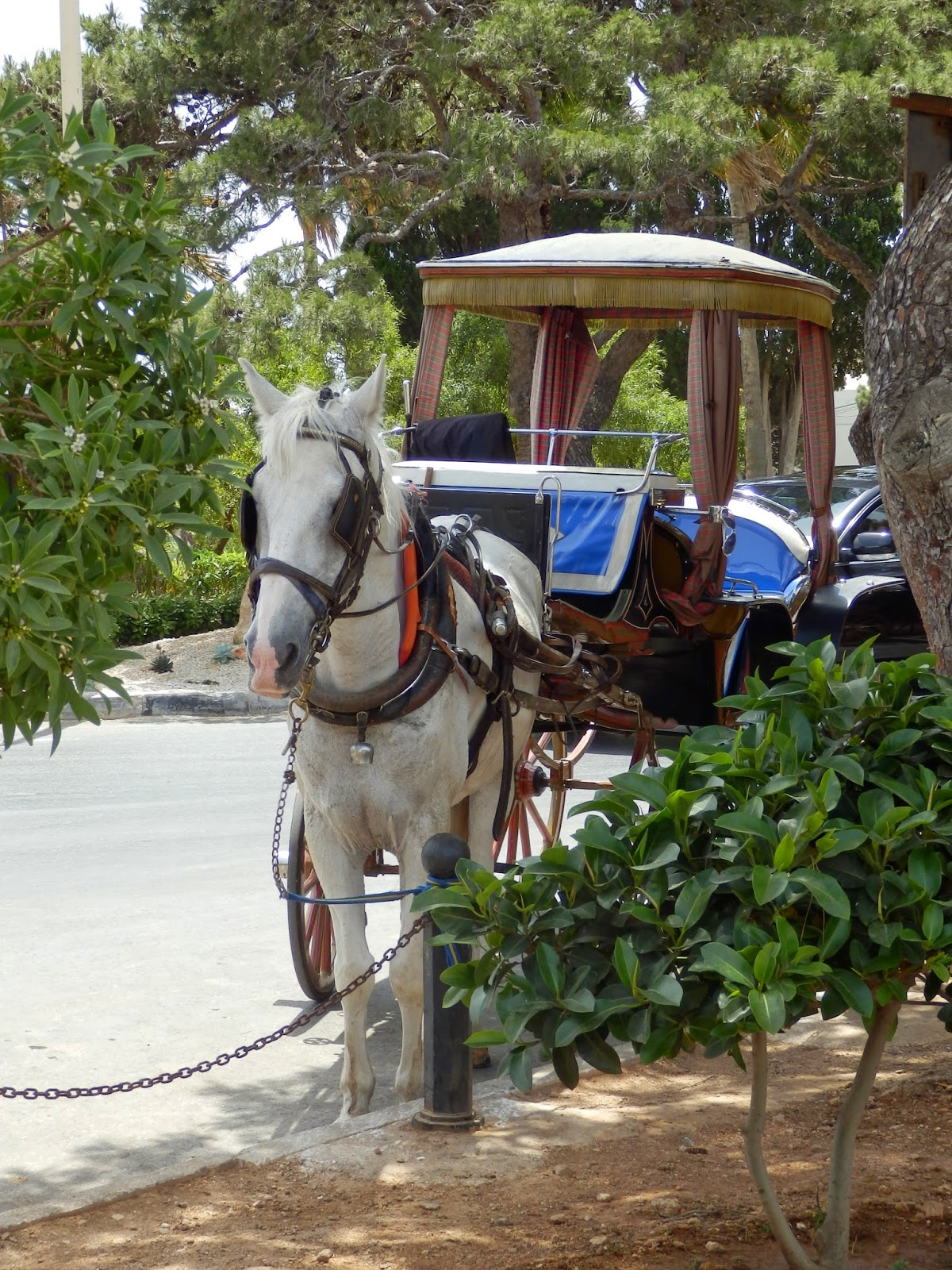 Horse carriage ride Mdina Malta