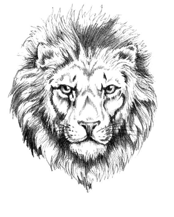 Sketch Tattoo Lion 3d Tattoos Images