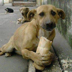 1.Quem alimenta um animal faminto recebe em troca algo que alimenta  qualquer coração: a gratidão!