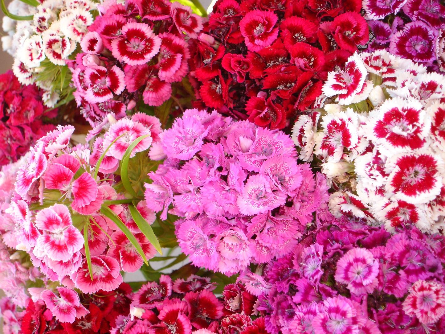 Fondos flor de verano llena de color verano fondos de - Flores de verano ...
