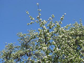 весна приближается