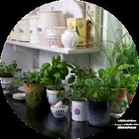 Kitchen Shelf Herb Garden