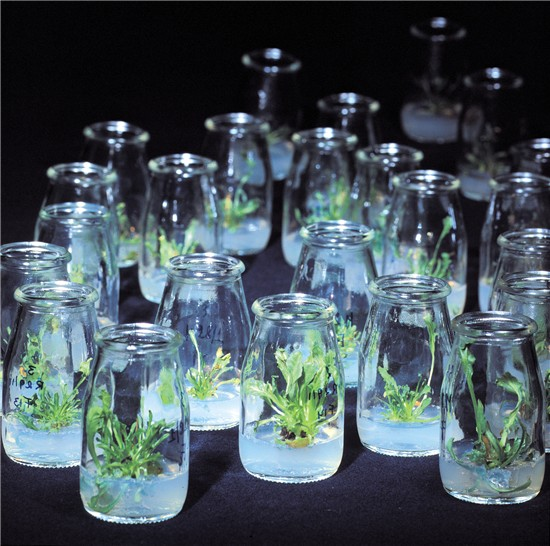contributions of biotechnology to agriculture Applications and contributions of biotechnology to agriculture biotechnology has contributed to works and carnal productiveness, the use of cistrons in works and animate beings has conferred protection against emphasis, plague, diseases and insects.
