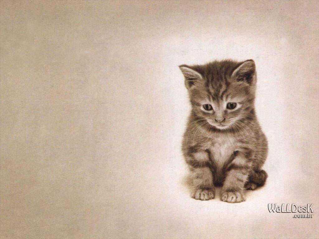 fotos de gatos | GATOS 1 | Pinterest | Imagens, Lindas