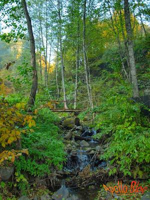 Apa curgatoare in Padure