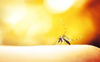 Τσίμπημα από κουνούπι: Πώς θα ανακουφιστείτε χωρίς να ξυστείτε