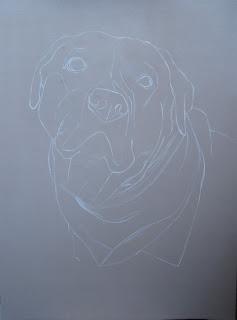 dessin labrador