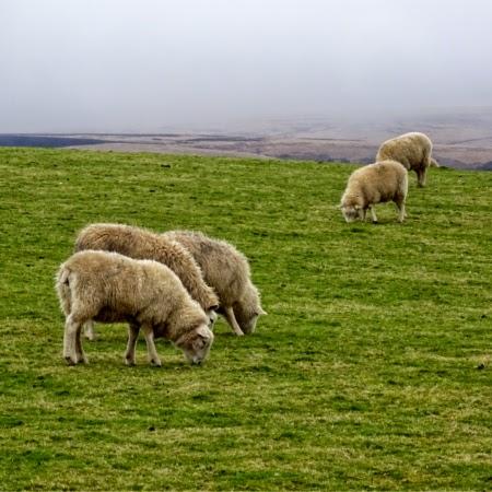 Parque Nacional de Exmoor