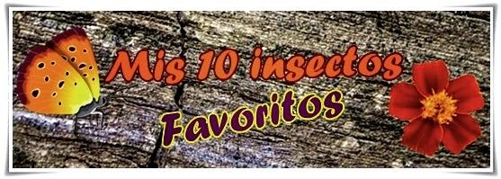 fotos-insectos