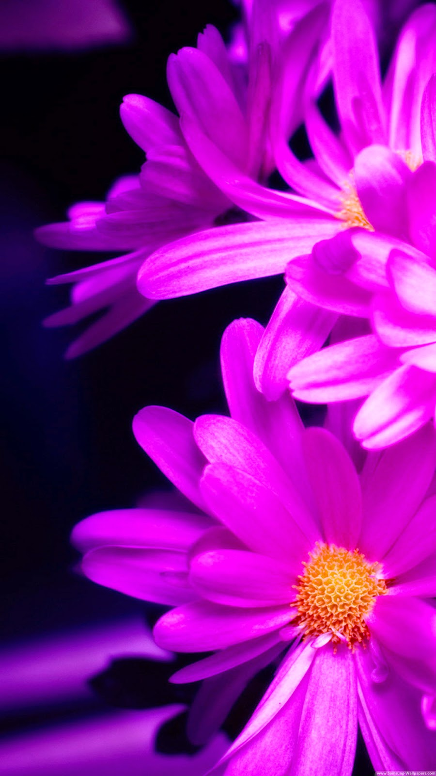 Wallpaper iphone violet - Wallpaper For Iphone 6 Plus