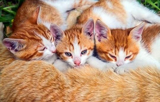 ginger stray kittens