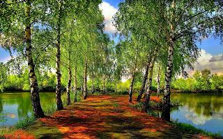 http://1.bp.blogspot.com/-JP291KAIWmk/UXurYsD4VmI/AAAAAAAAHUE/MH3N1CUShKY/s320/green-path-1280x800-wallpaper-12487.jpg