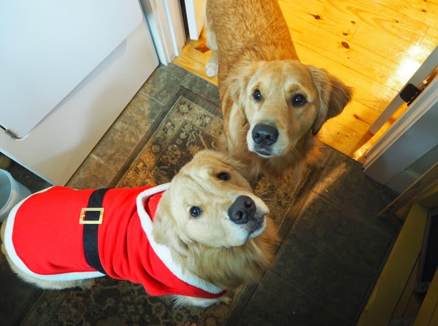 Dogs Christmas costume