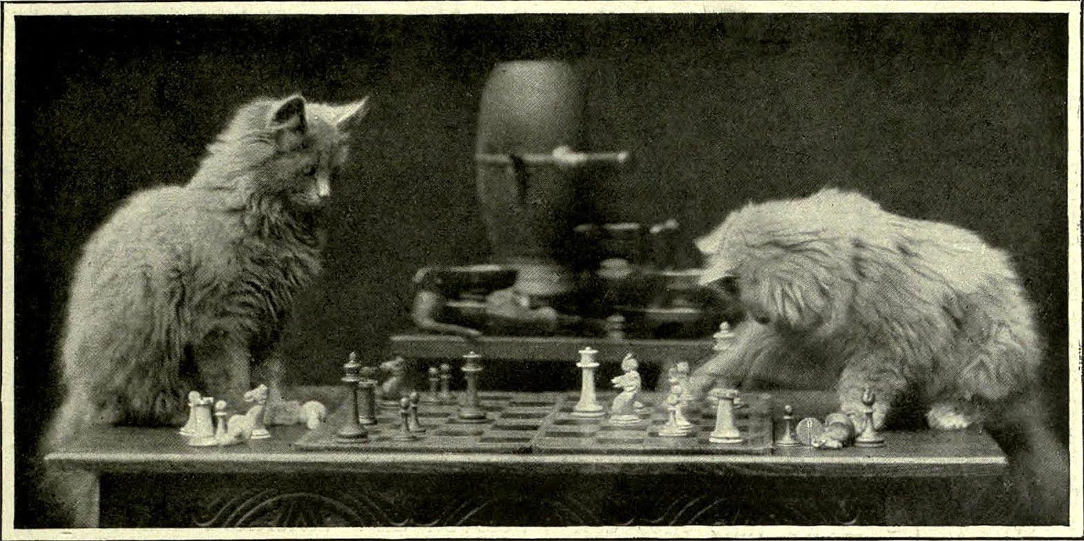 http://1.bp.blogspot.com/-JPPayfQQVQ0/UDjLbMryy_I/AAAAAAAAadU/y2elXlLH854/s1600/Cat_chess_2.jpg