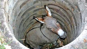 Lecturas para sexto grado la mula y el pozo - Banos de mula el pozo ...