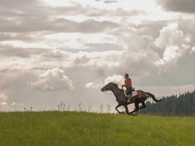 Orawa, Lipnica Wielka, Babia Góra, konie, jazda konna, jazda w terenie, koniec wakacji, wyjazd do Krakowa, transport koni