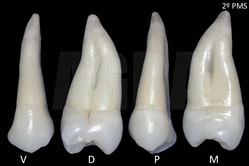 Anatomia Pr&... Carlos Ca